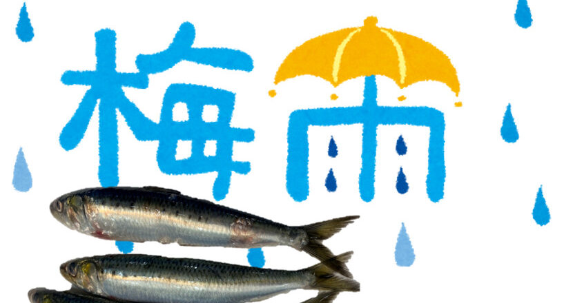 【2021年6月度】梅雨の水を飲んで美味しくなる魚